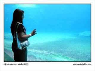 Anja Pomeroy staring into a fish tank at seaworld in durban now known as ushaka marine world photographed by Marcus Maschwitz