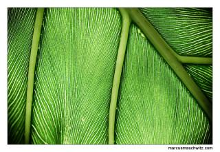 green leaves macro photography by marcus maschwitz
