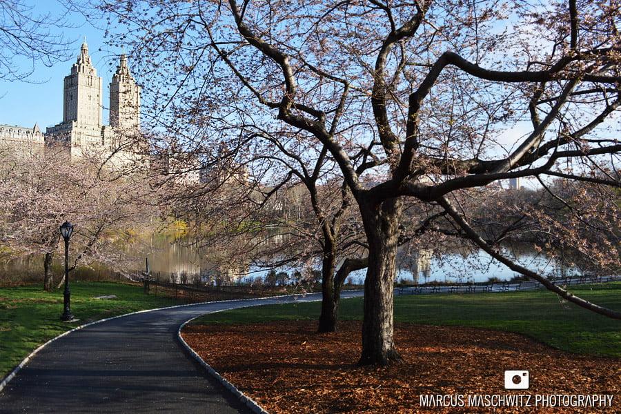 new-york-city-marcus-maschwitz-11