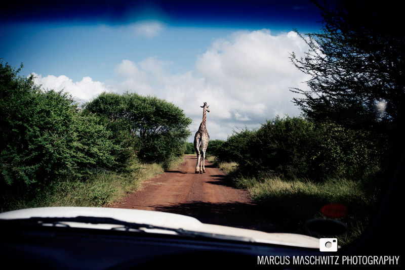 my-south-africa-02