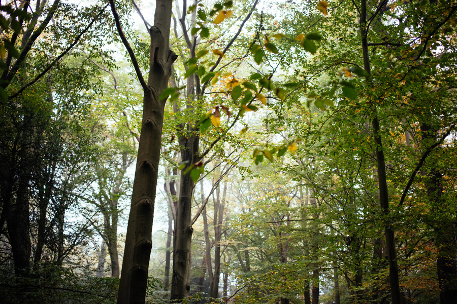 marcus-photo-forest-uk-1
