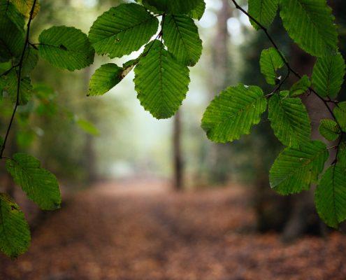 marcus-photo-forest-uk-3