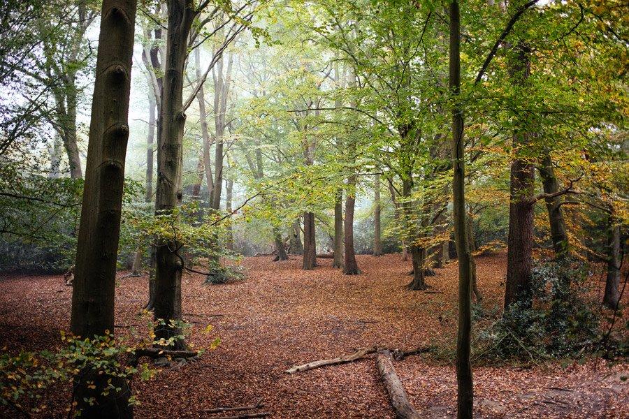 marcus-photo-forest-uk-5