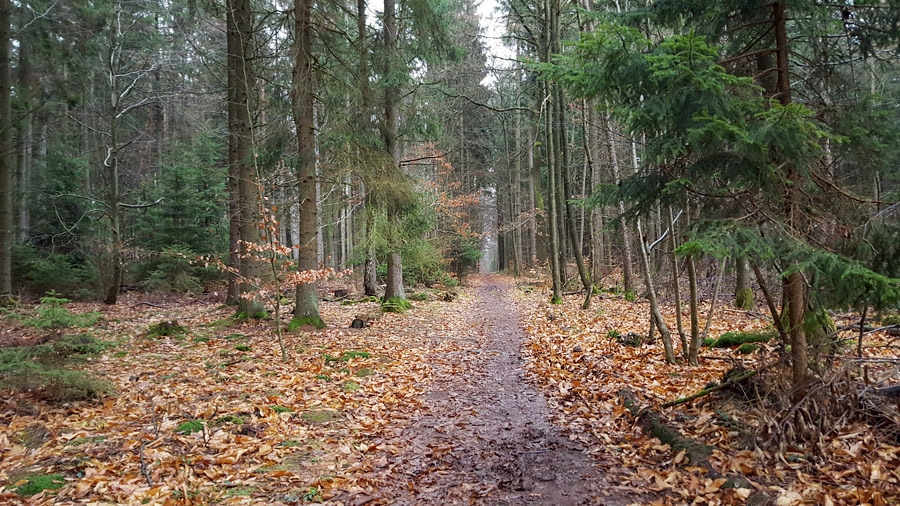 germany-forest